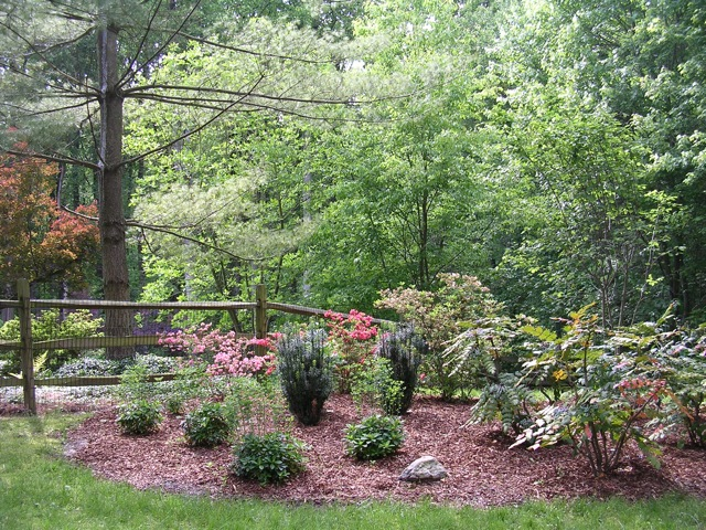 Deer Resistant Woodland Garden on Home Decorating Ideas